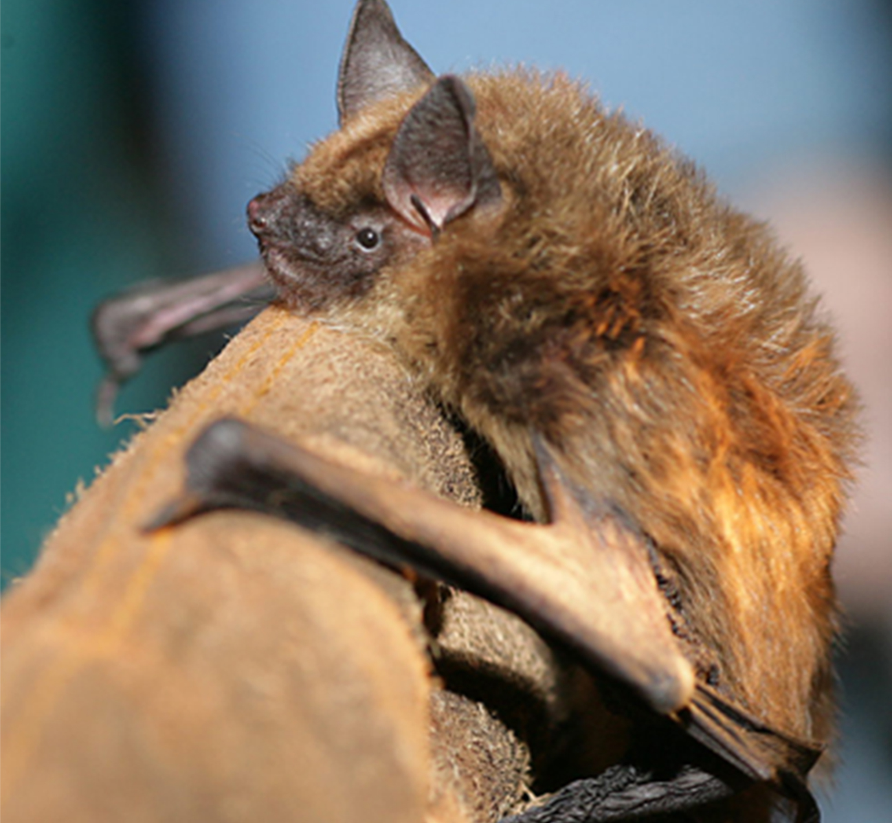 Bat On Leather Glove